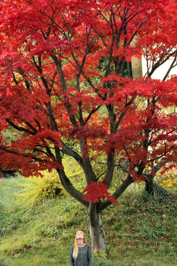 Svirig Blog Post Red Tree 1