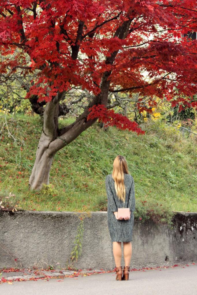 Svirig Blog Post Red Tree 2
